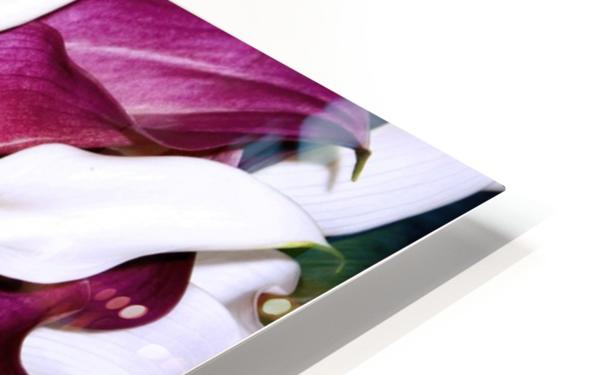 ORCHIDS HD Sublimation Metal print