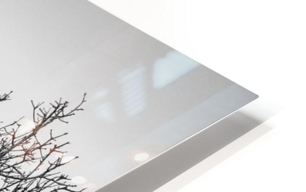 California Clouds through Mountain Brush in B&W HD Sublimation Metal print