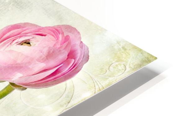 Pink buttercup HD Sublimation Metal print