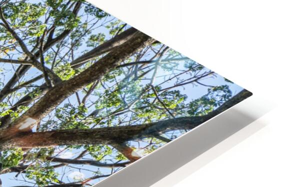 Princess of the Forest - 01 HD Sublimation Metal print