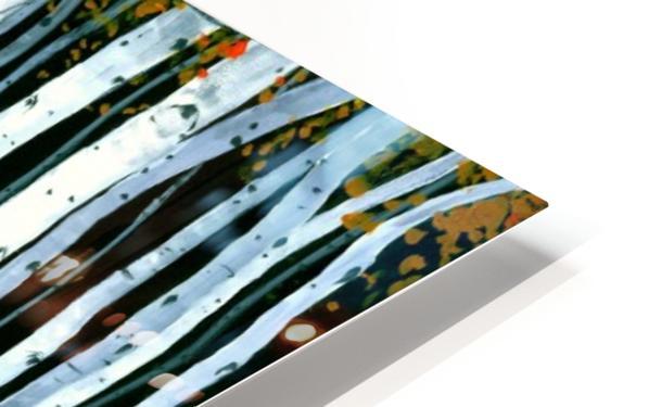 Autumn Aspens HD Sublimation Metal print