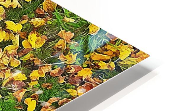 An Autumn Carpet HD Sublimation Metal print