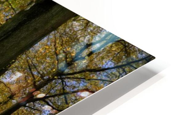Autumn Forest HD Sublimation Metal print