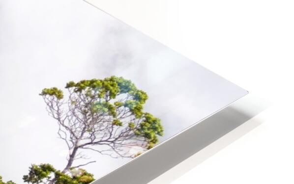 Wild Kauai 3 HD Sublimation Metal print