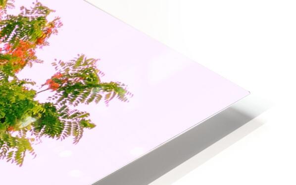 Blossoms HD Sublimation Metal print
