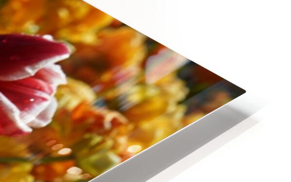 Spring Blooms of Holland 7 of 8 HD Sublimation Metal print