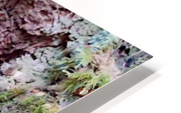 Tiny World 8 of 8 - Mushrooms and Fungi HD Sublimation Metal print