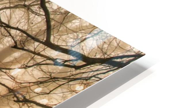 Which Path II HD Sublimation Metal print