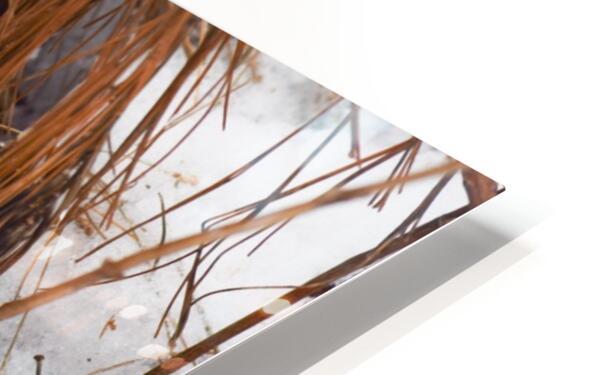 Refuge HD Sublimation Metal print