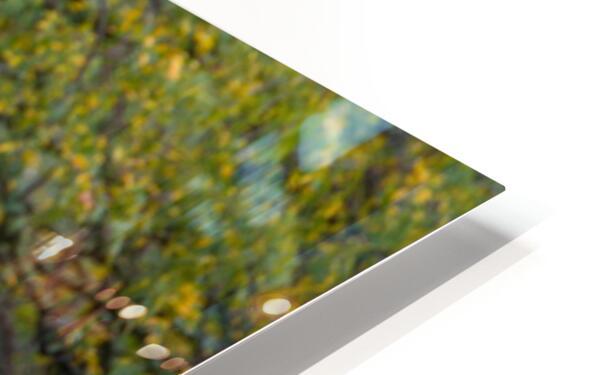 Portrait ap 2906 HD Sublimation Metal print