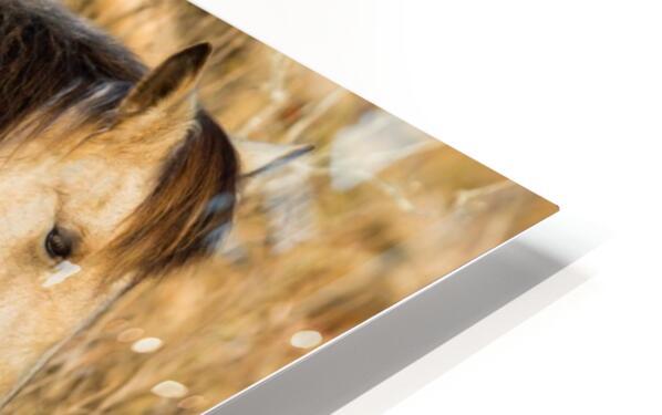 Wild Horse ap 2740 HD Sublimation Metal print