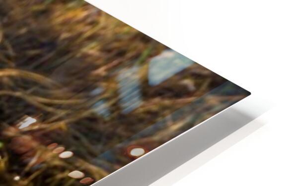 Great Blue Heron ap 2133 HD Sublimation Metal print