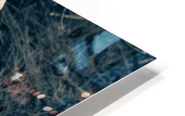 Great White Egret ap 1839 B&W Impression de sublimation métal HD