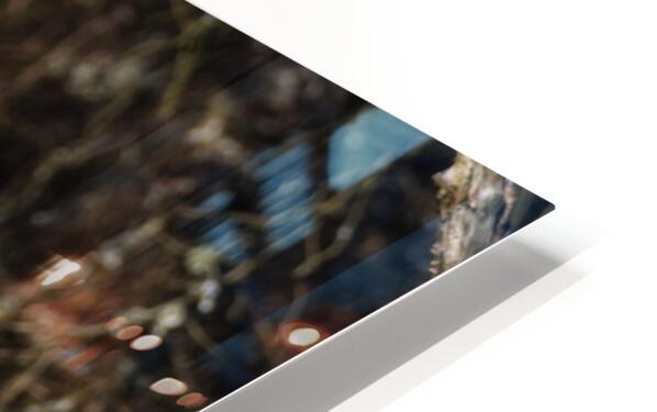 Great White Egret ap 2765 HD Sublimation Metal print