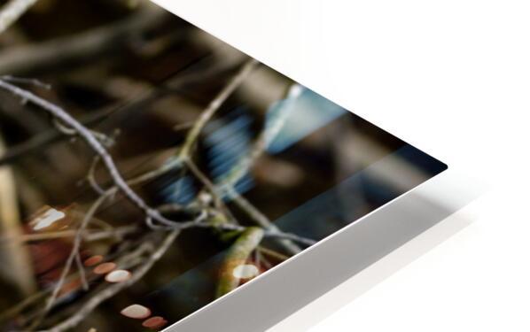 Great White Egret ap 2807 Impression de sublimation métal HD
