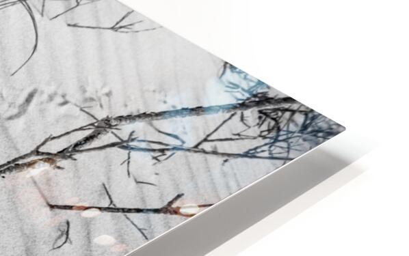 Bird Tracks ap 1605 B&W HD Sublimation Metal print