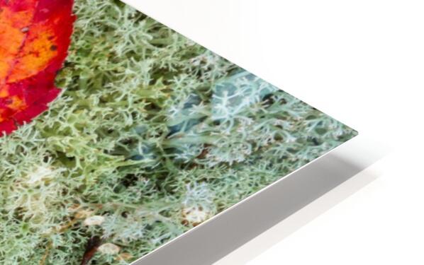 Leaves  N  Lichen ap 1553 HD Sublimation Metal print