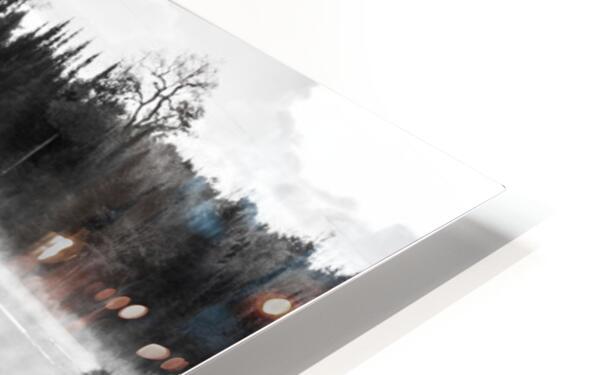 Swan Family ap 2694 B&W HD Sublimation Metal print