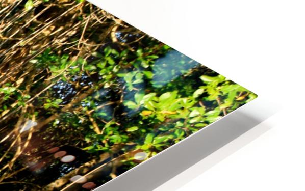 Mangrove roots HD Sublimation Metal print