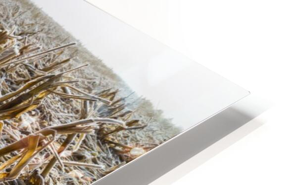 Frost ap 2031 HD Sublimation Metal print