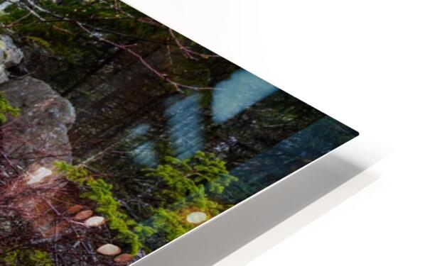 Moss   Lichen ap 2294 HD Sublimation Metal print