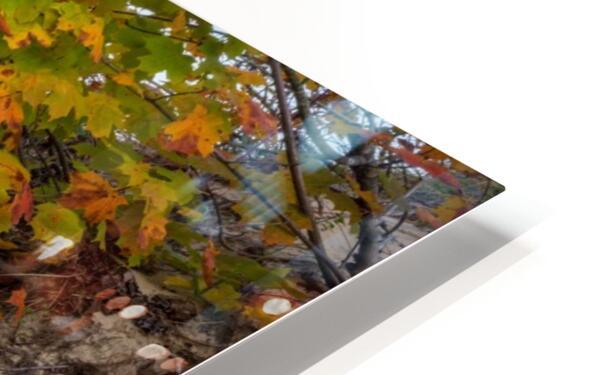 Blueberries ap 2526 HD Sublimation Metal print