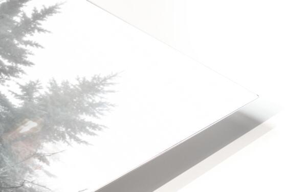 Lichen and Granite ap 2340 B&W HD Sublimation Metal print