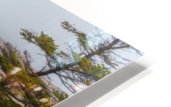Fog ap 2262 HD Sublimation Metal print