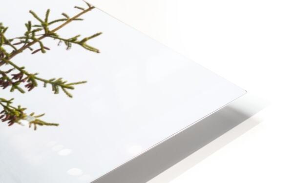 Lone Pine ap 2284 HD Sublimation Metal print