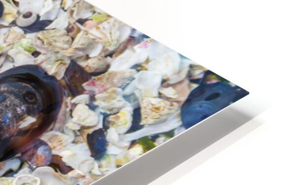 Barnacle Shells ap 1528 HD Sublimation Metal print