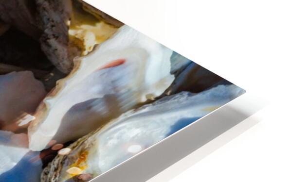 Shells ap 1747 HD Sublimation Metal print