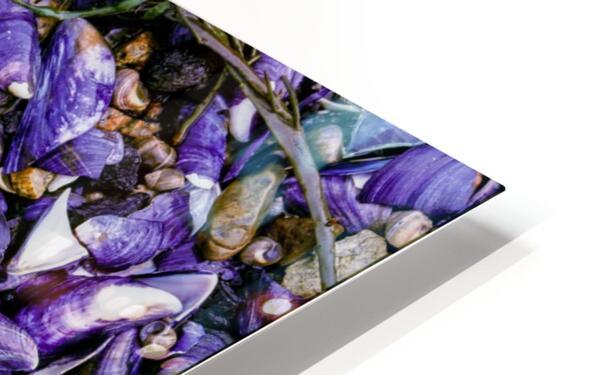 Shells ap 1519 HD Sublimation Metal print