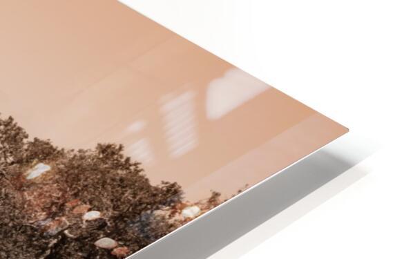 Ocracoke Light ap 1743 B&W HD Sublimation Metal print