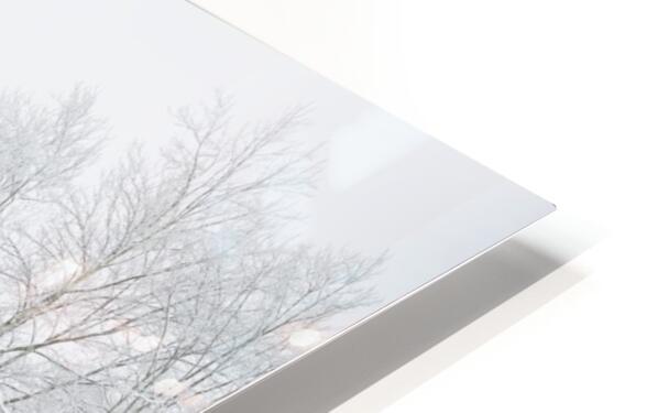 Treeline apmi 1573 HD Sublimation Metal print
