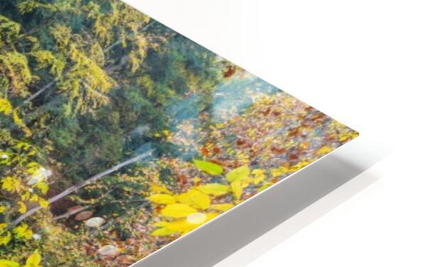 Birch apmi 1951 38x20 HD Sublimation Metal print