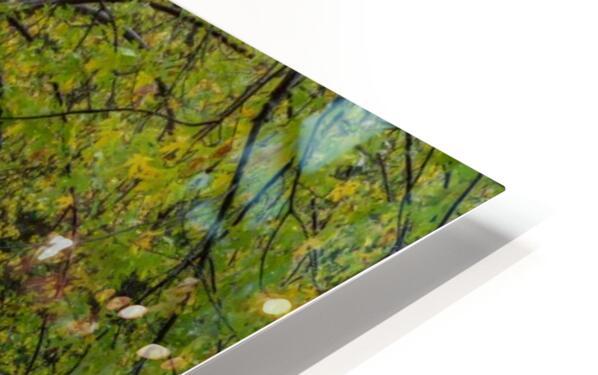 Maple Tree apmi 1919 HD Sublimation Metal print