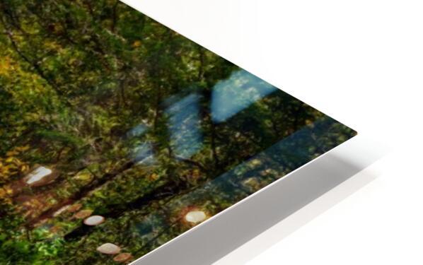 Red Creek Aspens apmi 1769 HD Sublimation Metal print