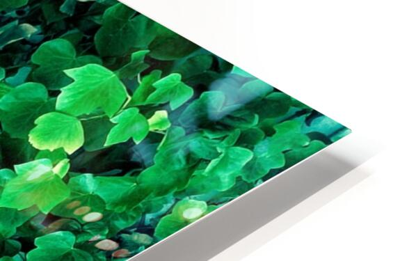 Leaves HD Sublimation Metal print