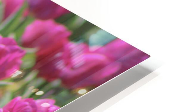 Fantasically Fuschia Tulips HD Sublimation Metal print