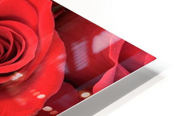 Eternal Roses HD Sublimation Metal print