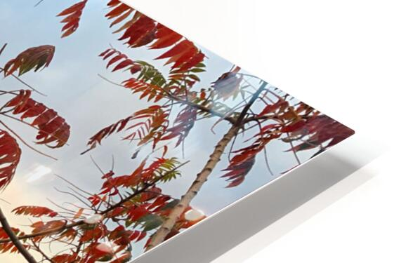Autumn in New York  HD Sublimation Metal print