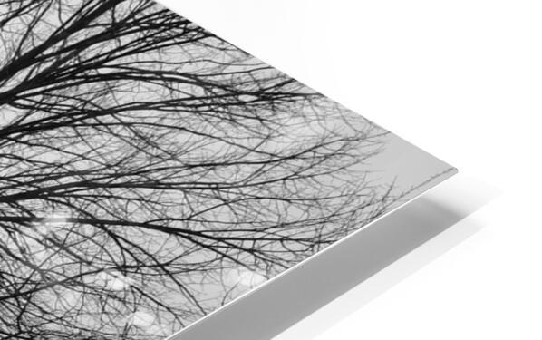 L'arbre de vie Impression de sublimation métal HD