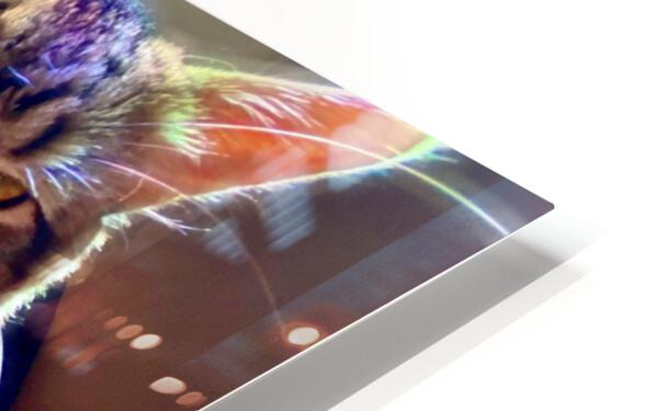 Rainbow Kitten Surprise  HD Sublimation Metal print