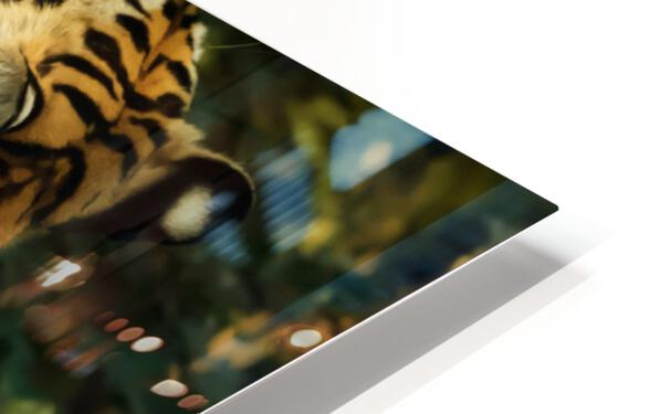 Indian Tiger HD Sublimation Metal print