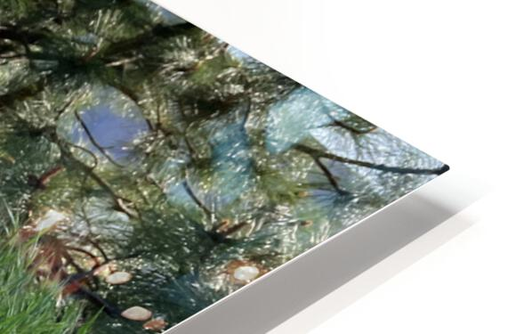 Blossom in Tall Grass HD Sublimation Metal print