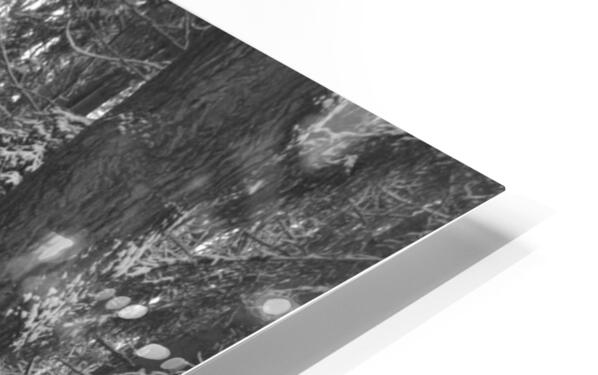 Blue Barrel in Woods HD Sublimation Metal print