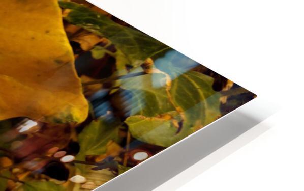 BEF07FDB 2FCF 424A 8A1F 5DBA1711F3B9 HD Sublimation Metal print