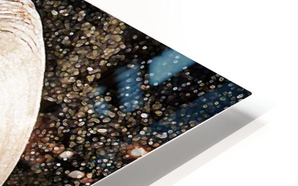 Seashells HD Sublimation Metal print