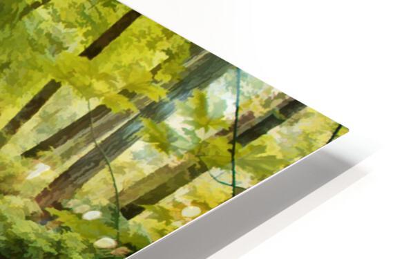 Fern Hollow HD Sublimation Metal print