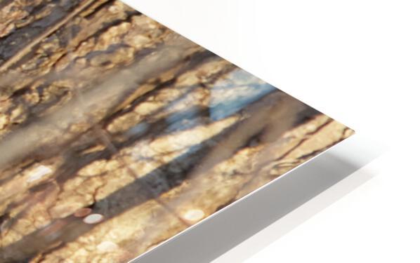 Racoon peeking through twigs HD Sublimation Metal print